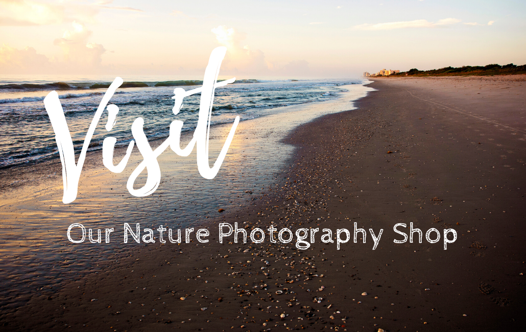 nature photography shop with beach photo