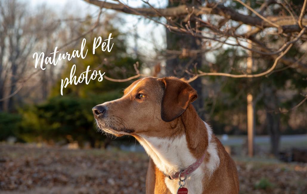 pet photography of tan and brown dog paducah, kentucky